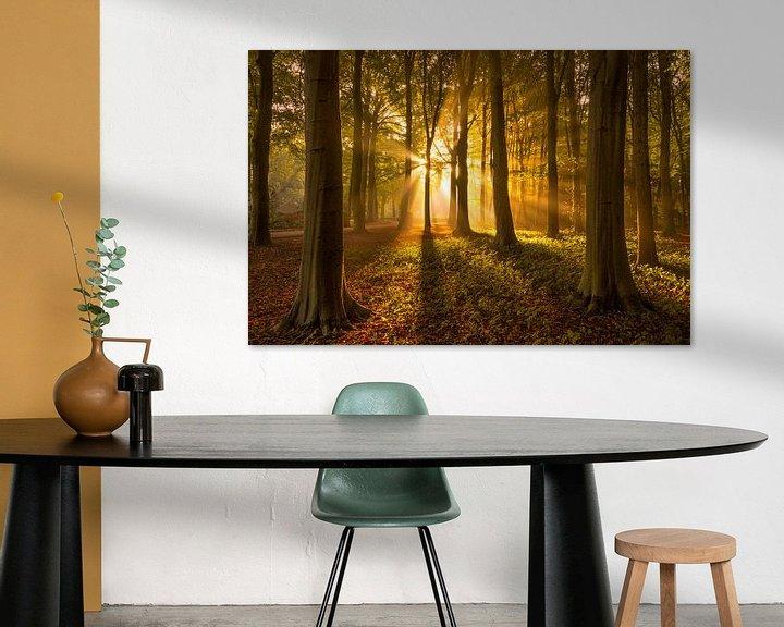 Sfeerimpressie: Herfstbos met Zonnestralen van Martijn van der Nat