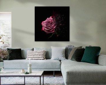 Le Fleur sur Fela de Wit