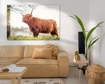 Schotse Hooglander op Jiltdijksheide (Westerkwartier) von Martijn van Dellen