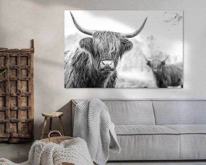 Sfeerimpressie: Schotse Hooglanders in natuurgebied Jiltdijksheide (zwart/wit) van Martijn van Dellen