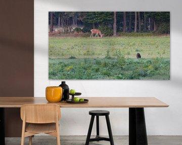 Herten, Zwijnen sur Gijs van Veldhuizen