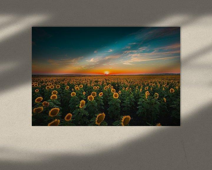 Sfeerimpressie: Sunflowers at sunset van Andy Troy
