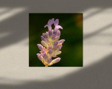 De kelk van de bloem  von Wilbert Van Veldhuizen