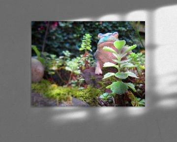 De kikker die als dier de tuin in kijkt op de vijver von Wilbert Van Veldhuizen