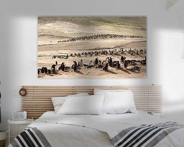 """Pingouins Gentoo au """"The Neck"""" ;"""