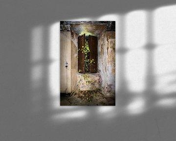Fenster mit grünem Efeu von Inge van den Brande
