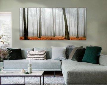 Beukenbomen in de mist van Sjoerd van der Wal