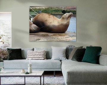 Een hoogeachte zeehond in Dolfinarium van Wilbert Van Veldhuizen