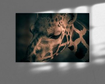 rothschild giraffe von Bart Berendsen