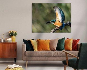 Eisvogel von Linda Raaphorst