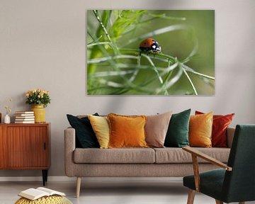 Lieveheersbeestje van Ronald Jansen
