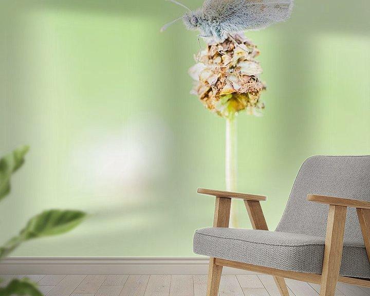 Sfeerimpressie behang: Vlinder van Steven Hendrix