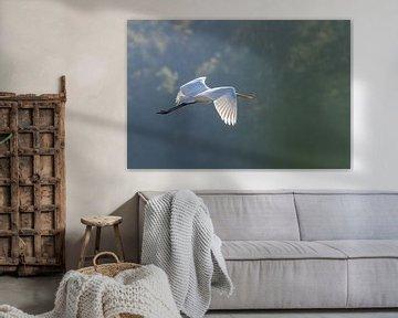 vliegende grote zilverreiger van Sven Scraeyen