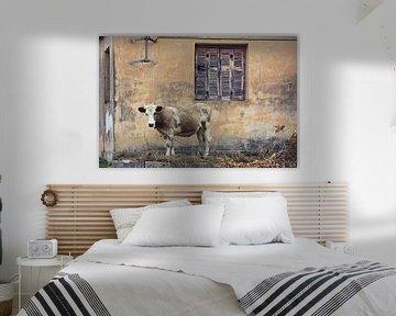 lonely cow..  van Els Fonteine