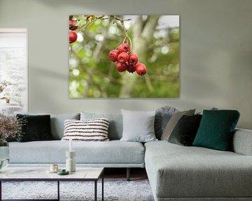 Rode besjes - Stilleven von Fotografie Sybrandy