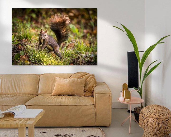 Sfeerimpressie: Eekhoorn van Bart Vodderie