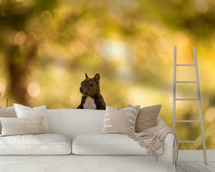 Sfeerimpressie behang: Eekhoorn van Bart Vodderie