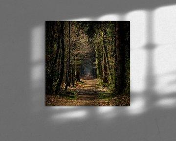 Bospad in de herfst van ErikJan Braakman