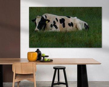 Koe die geniet van de avondzon. von Wilbert Van Veldhuizen