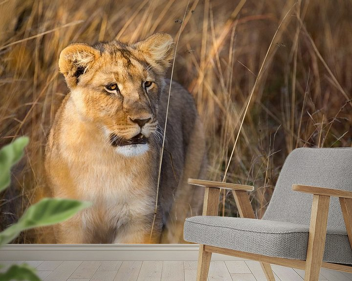 Sfeerimpressie behang: Leeuwenwelp van Claudia van Zanten