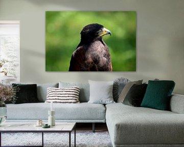 Nieuwsgierige Roofvogel von Nicole de Leest