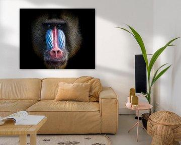 Mandril-Affe mit schönen Farben von Karin vd Waal