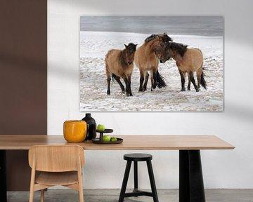 Paardenknuffel.  van Muriel Polet
