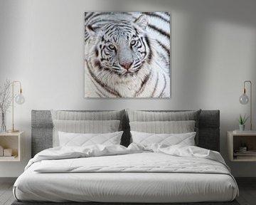 Weißer Tiger  von Marcel van Balken