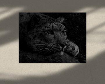 Witte Bengaalse tijger in zwart wit  von Sandra de Moree