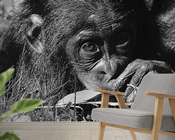 Beispiel fototapete: Baby chimp von Sandra de Moree