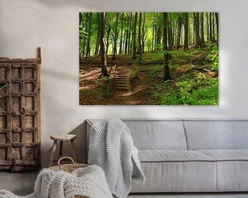 Rügens Wälder von Ostsee Bilder