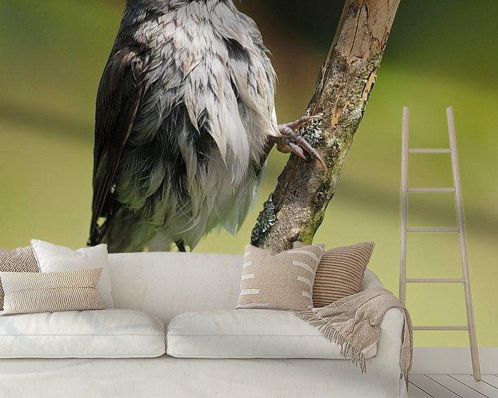 Beispiel fototapete: Fris gewassen zwartkop von Astrid Brouwers