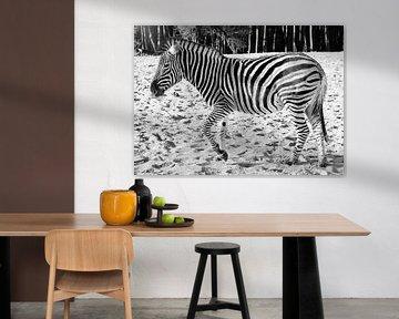 Zebra  von Wendy Tellier - Vastenhouw