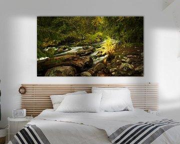 Herfst rivier II, Fulufjallet Nationaal Park, Zweden van Gerhard Niezen Photography