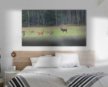 Deer  von Wilbert Van Veldhuizen