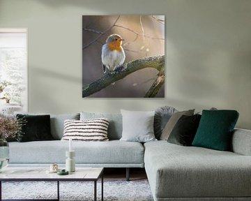 Robin (Erithacus rubecula) à la lumière douce du soleil