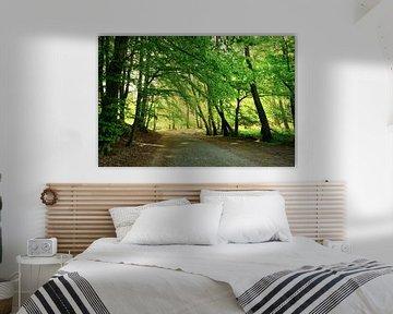 Forest von Ostsee Bilder