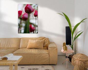 Roze Tulpen van Marco de Groot