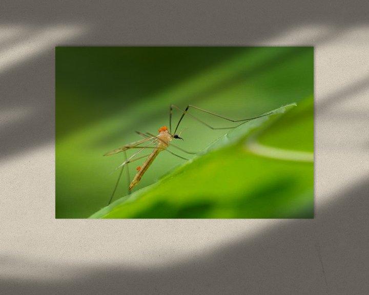 Beispiel: Crane fly with mites von Astrid Brouwers
