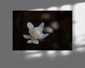 Ontluikende lente von Marco de Groot