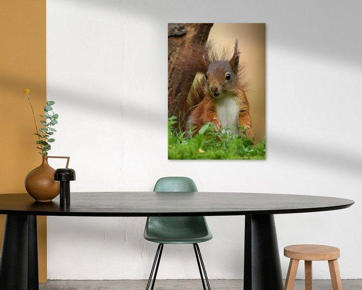 Sfeerimpressie: Eekhoorn van Wouter Midavaine