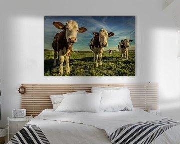 Koeien in het gelid