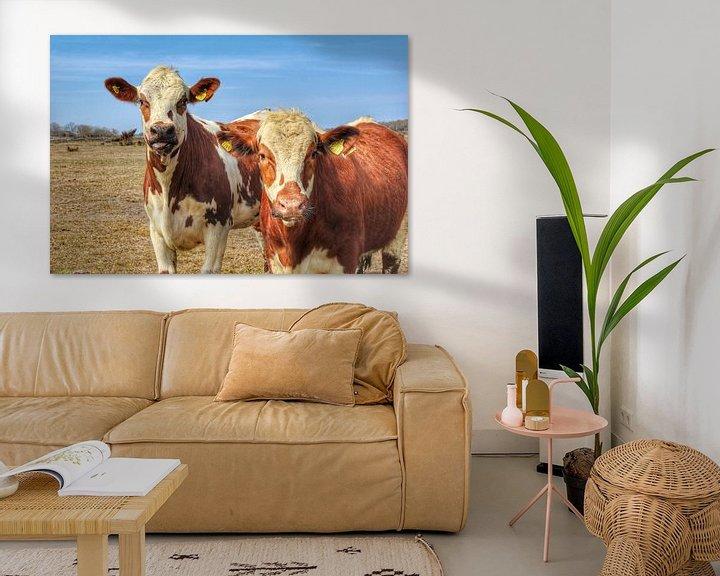 Sfeerimpressie: Zweedse koe van Ron de Regt