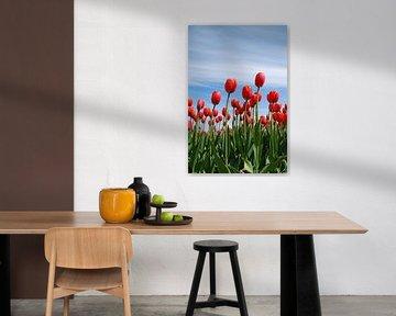 Rote Tulpen sur Leuntje 's shop