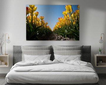 Tulpen van Johan van der Helm