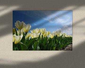 Bollenveld met witte tulpen von Leuntje 's shop