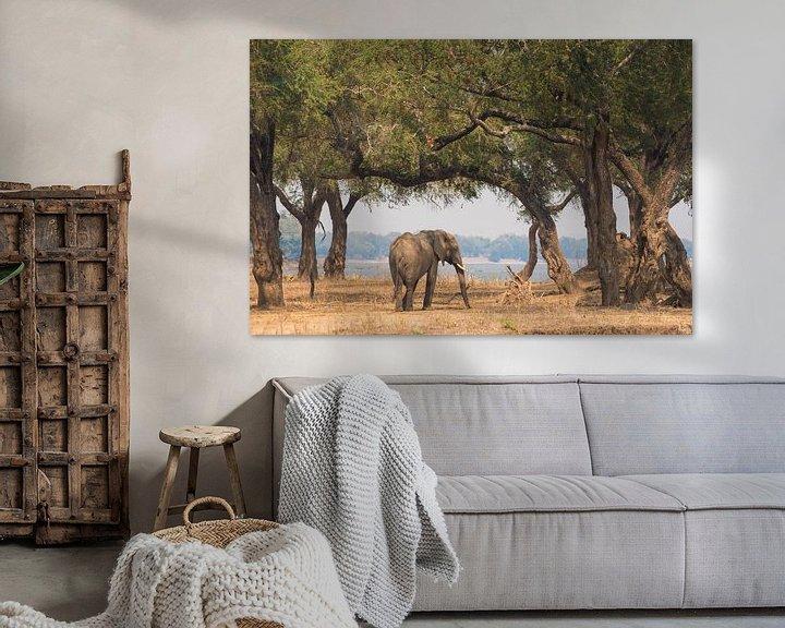 Sfeerimpressie: Afrikaanse olifant van Francis Dost