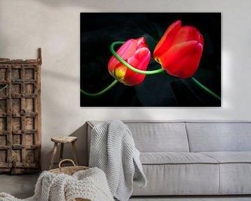 Rote Tulpen von Holger Debek