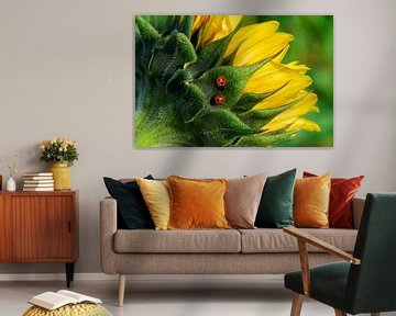 Zwei Marienkäfer auf Sonnenblume von George Burggraaff