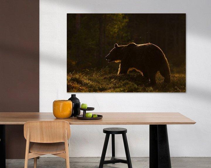 Sfeerimpressie: Bruine beer in het late zonlich. van Alex Roetemeijer